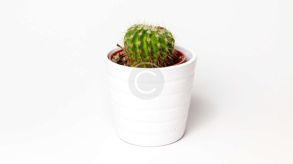 Houseplants of the Month August: Cacti